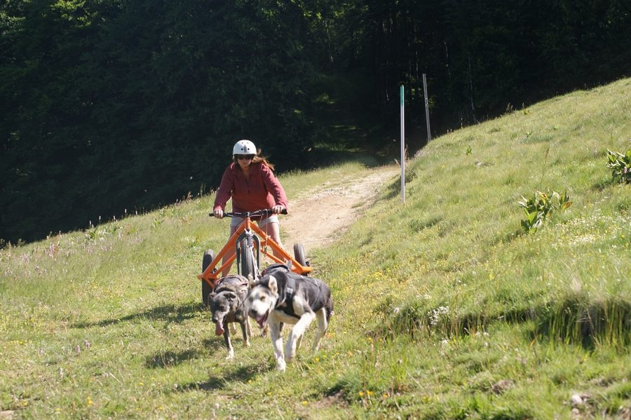 Chiens-de-traineau-Vercors-Cani-Kart-2-1