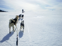 chiens-traineaux-vercors-mushers-1