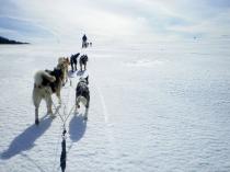 chiens-traineaux-vercors-mushers-1