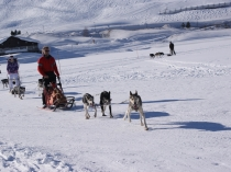 chien-traineau-vercors-musher
