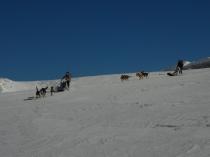 chiens-traineaux-vercors-raid-12