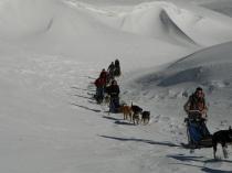 chiens-traineaux-vercors-raid-2
