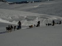 chiens-traineaux-vercors-raid-5