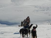 chiens-traineaux-vercors-raid-7