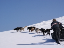 chiens-traineaux-vercors-raid