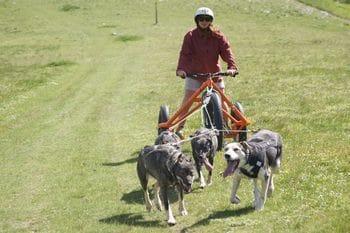 Chiens de traineau Vercors Cani Kart 1