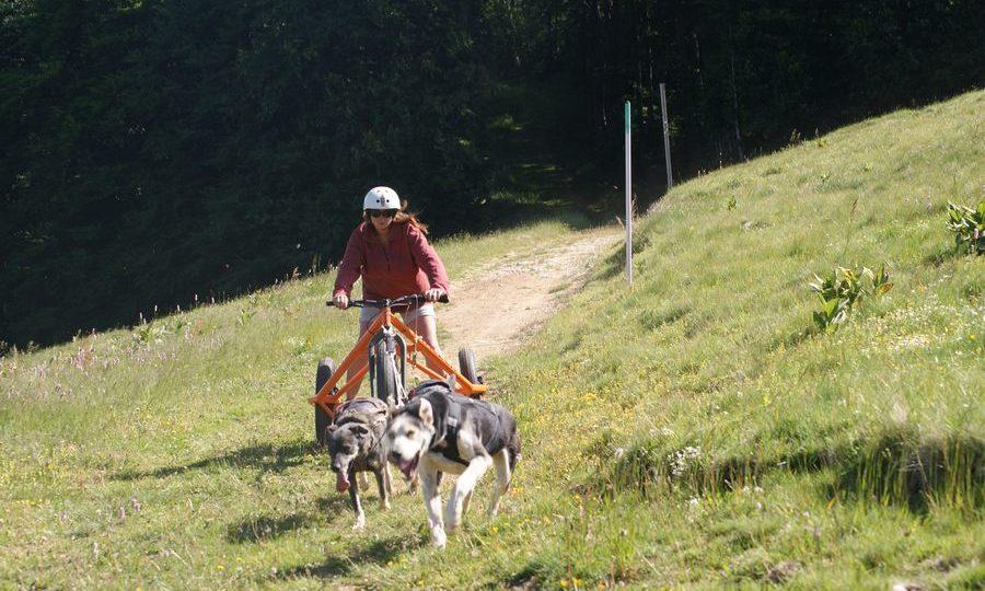 Chiens de traineau Vercors Cani Kart 2