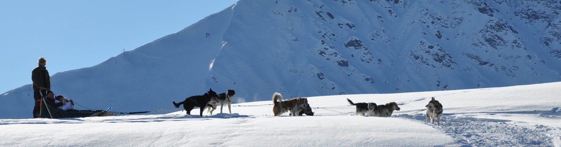 chien-de-traineau-Vercors-randonnées 10