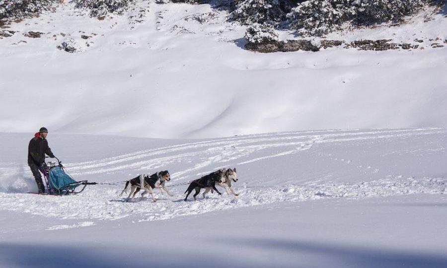 chien-traineau-vercors-mushers-2-41