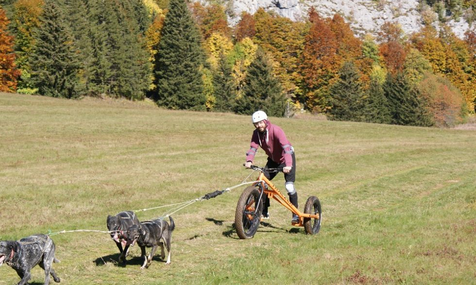 Cani fat kart herbouilly